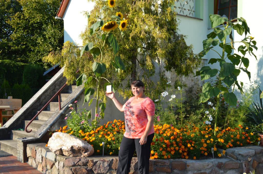 LaNa-Sonnenblumen in Blüte